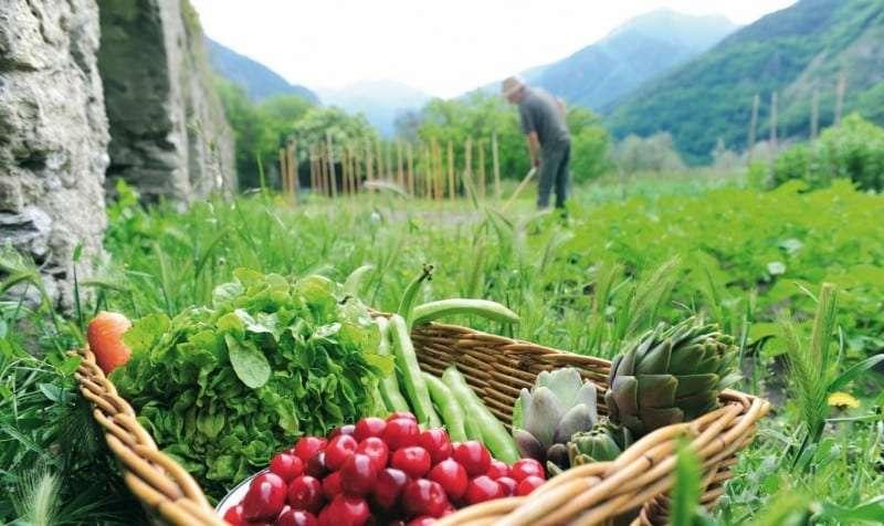 Να αυξήσει τις πιστώσεις για τη βιολογική καλλιέργεια στην Ανατολική Μακεδονία και τη Θράκη καλεί ο Περιφερειάρχης ΑΜΘ τον Υπουργό Αγροτικής Ανάπτυξης