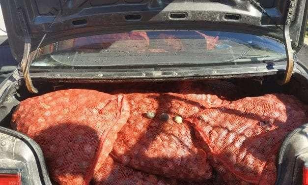 Συνελήφθη 60χρονος ο οποίος μετέφερε παράνομα με  Ι.Χ.Ε. αυτοκίνητο μεγάλη ποσότητα οστρακοειδών ακατάλληλων για κατανάλωση <br> <span style='color:#777;font-size:16px;'>Κατασχέθηκαν 740 κιλά οστρακοειδή  </span>